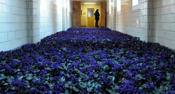 BLOOM-by-Anna-Schuleit-Blue-Hallway-main